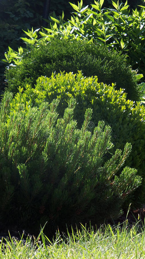 Green shrubs stock photography