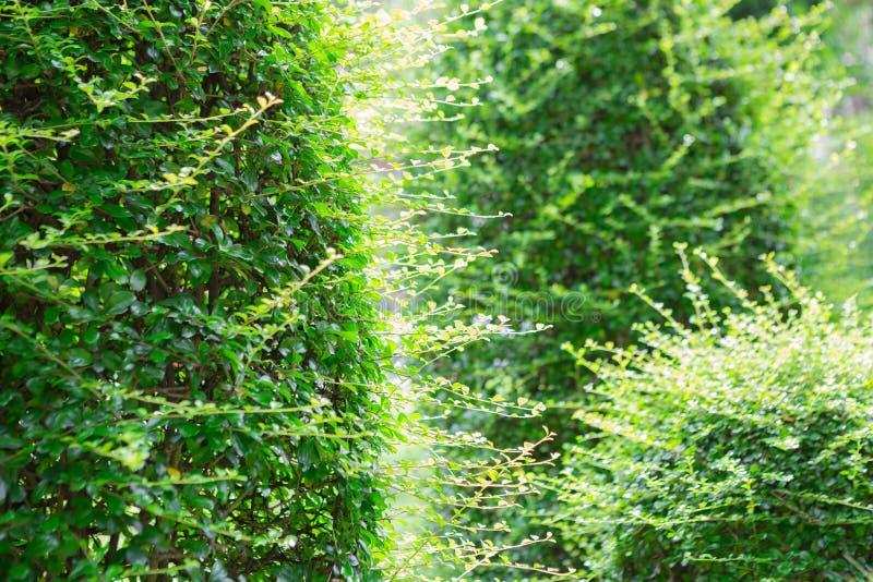 Green shrubs in the garden royalty free stock photography
