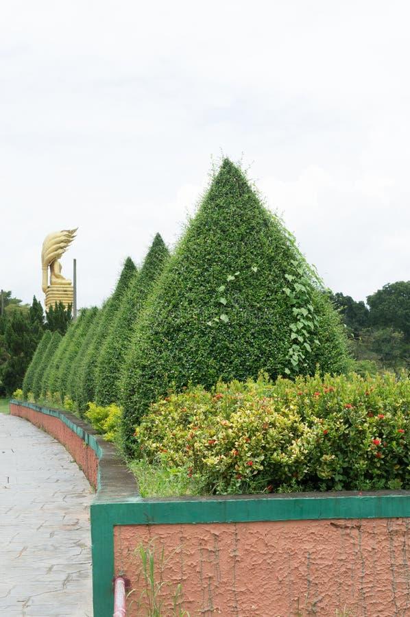 Green shrubs stock image