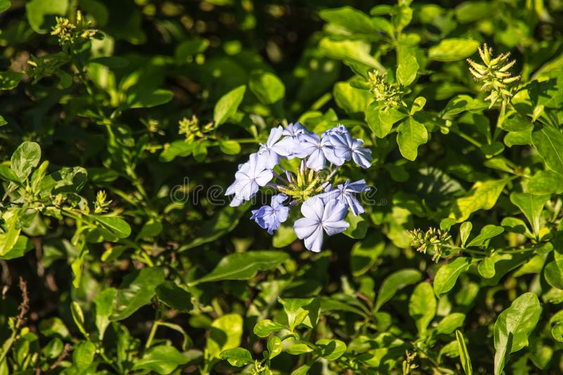 Green shrubs with purple flowers under soft sunlight royalty free stock photography