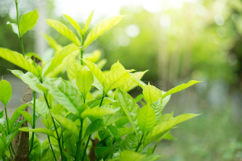 Green shrubs With sunlight on  background blurred royalty free stock photography