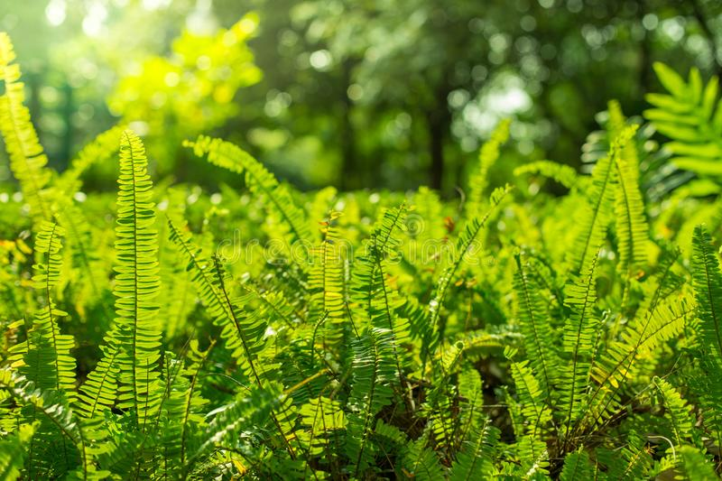 Green shrubs With sunlight on  background blurred stock photo