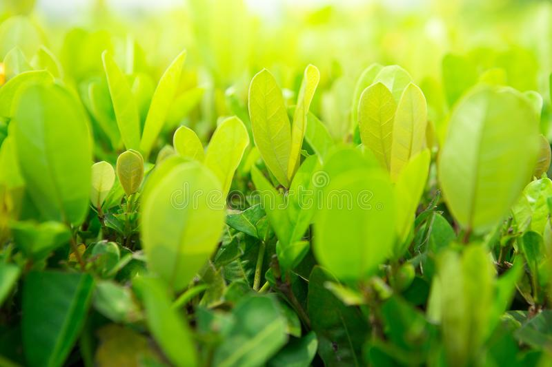 Green shrubs With sunlight stock photos