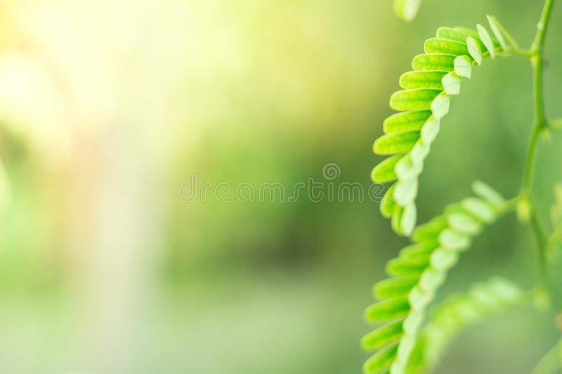 Green shrubs With sunlight on background blurred stock photography