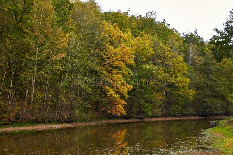 Green skogen och floden Forest Lake Floden fl?dar bland tr?d H?rlig sikt av naturen Landskapfoto av den gr?na skogen royaltyfri fotografi
