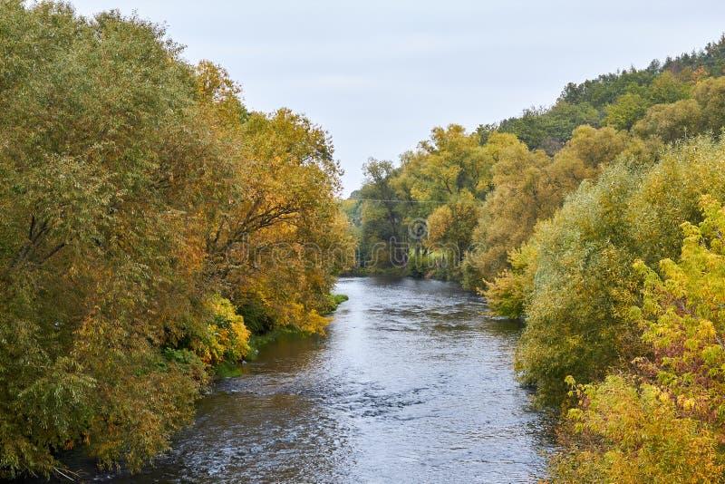 Green skogen och floden Forest Lake Floden fl?dar bland tr?d H?rlig sikt av naturen Landskapfoto av den gr?na skogen arkivfoton