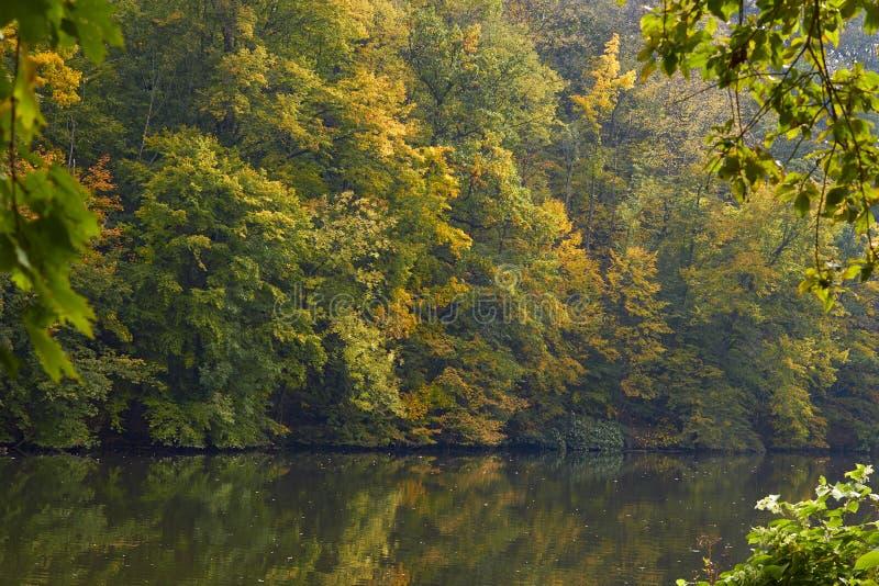 Green skogen och floden Forest Lake Floden fl?dar bland tr?d H?rlig sikt av naturen Landskapfoto av den gr?na skogen arkivbild