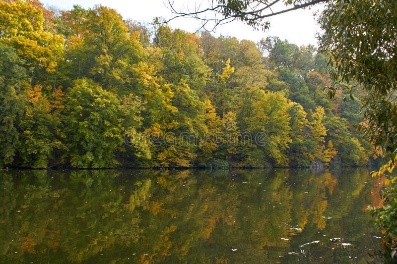 Green skogen och floden Forest Lake Floden fl?dar bland tr?d H?rlig sikt av naturen Landskapfoto av den gr?na skogen arkivbilder
