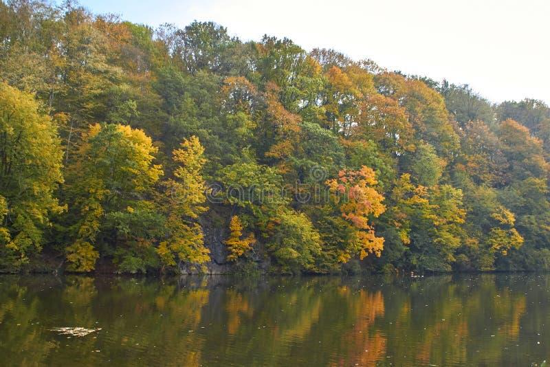 Green skogen och floden Forest Lake Floden fl?dar bland tr?d H?rlig sikt av naturen Landskapfoto av den gr?na skogen royaltyfri foto