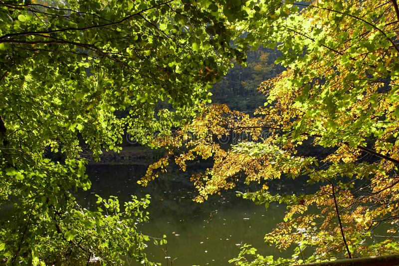 Green skogen och floden Forest Lake Floden fl?dar bland tr?d H?rlig sikt av naturen Landskapfoto av den gr?na skogen royaltyfria foton