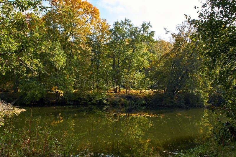 Green skogen och floden Forest Lake Floden fl?dar bland tr?d H?rlig sikt av naturen Landskapfoto av den gr?na skogen royaltyfria bilder