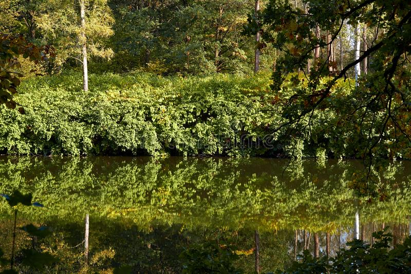 Green skogen och floden Forest Lake Floden fl?dar bland tr?d H?rlig sikt av naturen Landskapfoto av den gr?na skogen royaltyfri bild