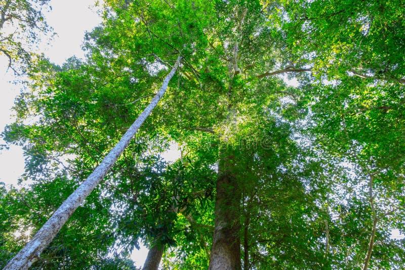 Green skogtrees royaltyfri fotografi