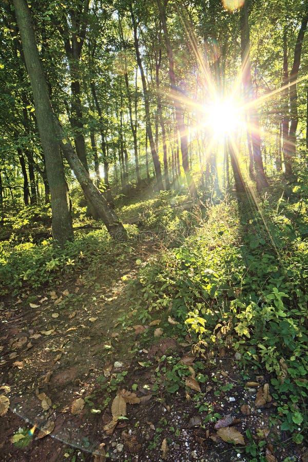 Green skogtrees fotografering för bildbyråer