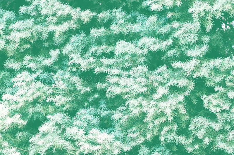 Green small spruce brunches with short needles background royalty free stock photos