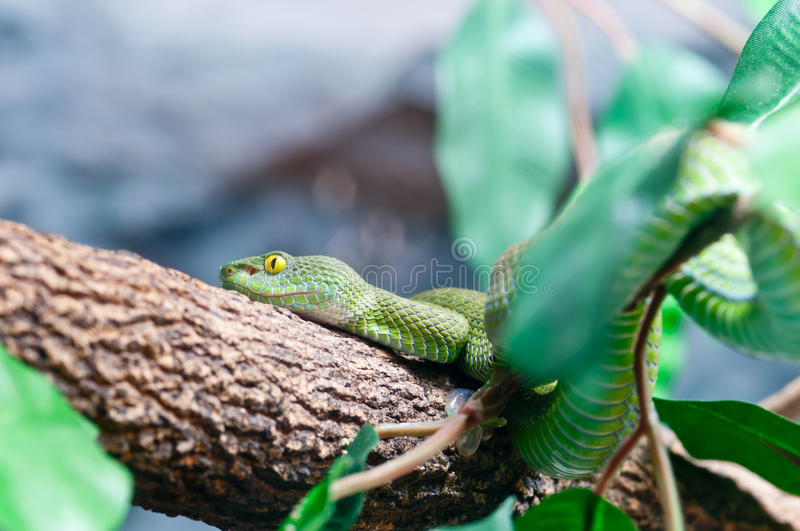 Download Green Snake stock image. Image of animal, fear, nature - 20492371