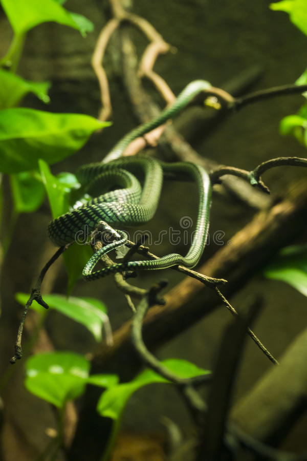 Green Snake In Branches Free Public Domain Cc0 Image