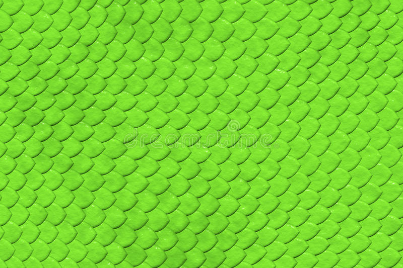 Green Snake skin pattern. Green snake skin close-up shoot with a attractive colour stock photography
