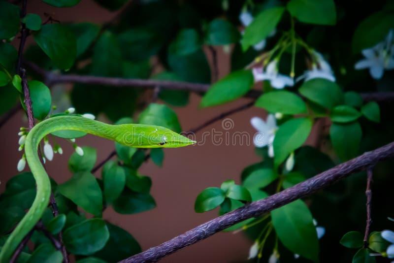 Green snake on the tree stock photos