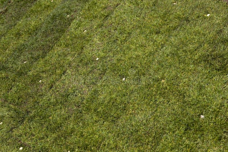 Download Green sod grass stock image. Image of landscape, landscaping - 14110815