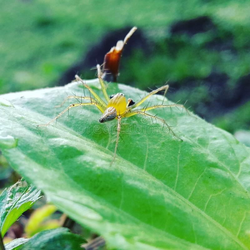 Green spider royalty free stock photography