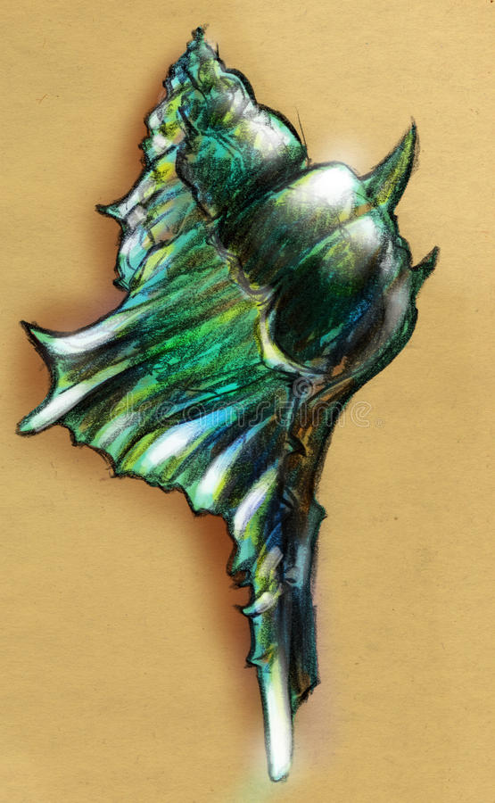 Green spiky sea shell sketch royalty free stock photography