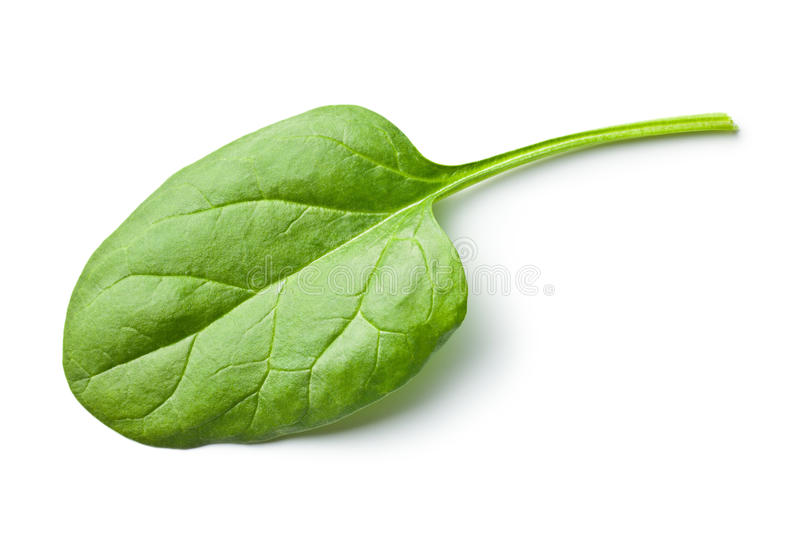 Green spinach leaf royalty free stock photography