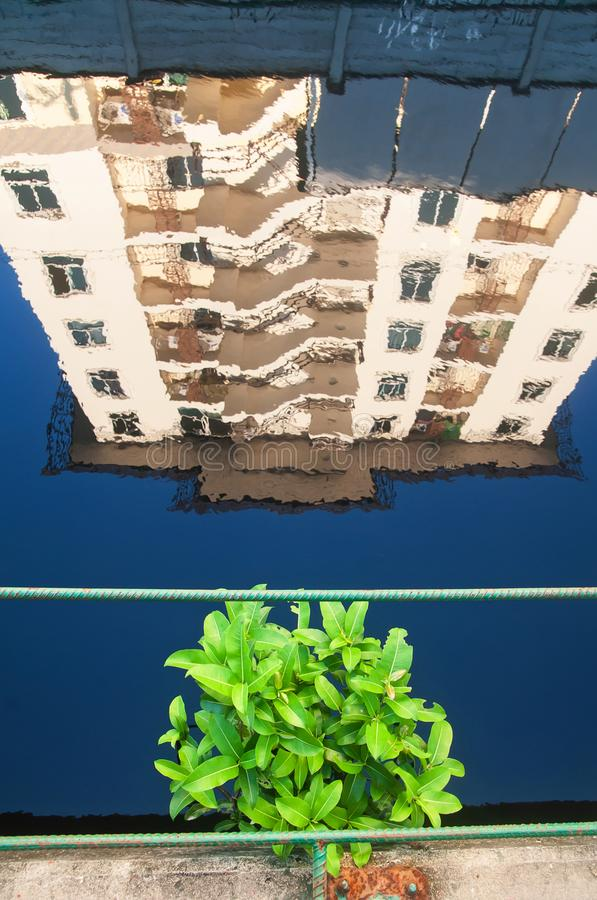 A green spot in urban city, high angle view of a little green tree over blue canal royalty free stock photo