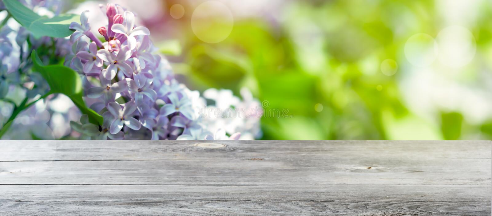 Green spring background with sunny bokeh and empty wooden table for a decoration royalty free stock photos