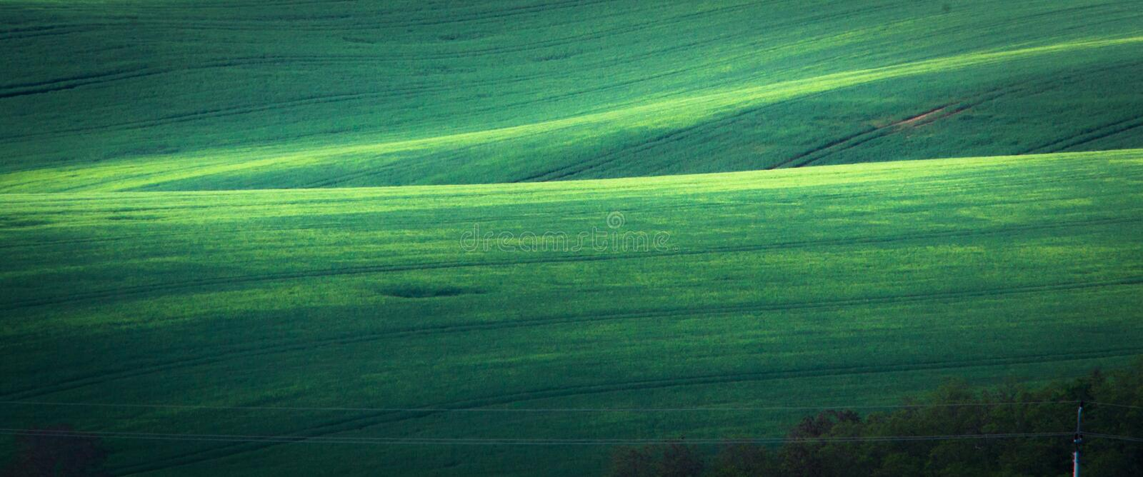 Green spring field abstract background stock image