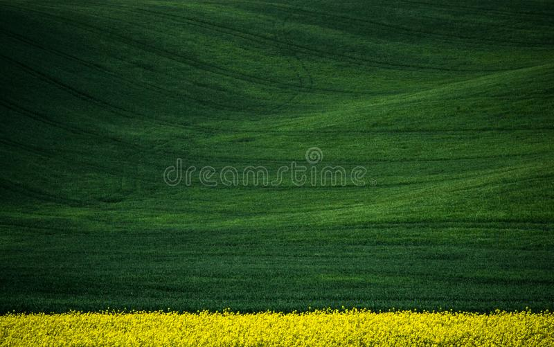 Green spring field abstract background. Green spring sown field abstract eco background. Summer hill minimal nature wallpaper. South Moravia, Czech Republic royalty free stock images
