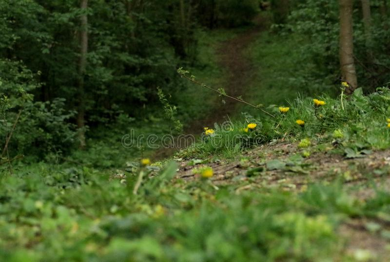 Spring forrest with path in the middel. Green spring forrest with a brown path in the middel leading to no-where royalty free stock images