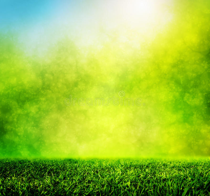 download green spring grass against natural nature blur stock photo image of horizon morning grass background hd l96 background