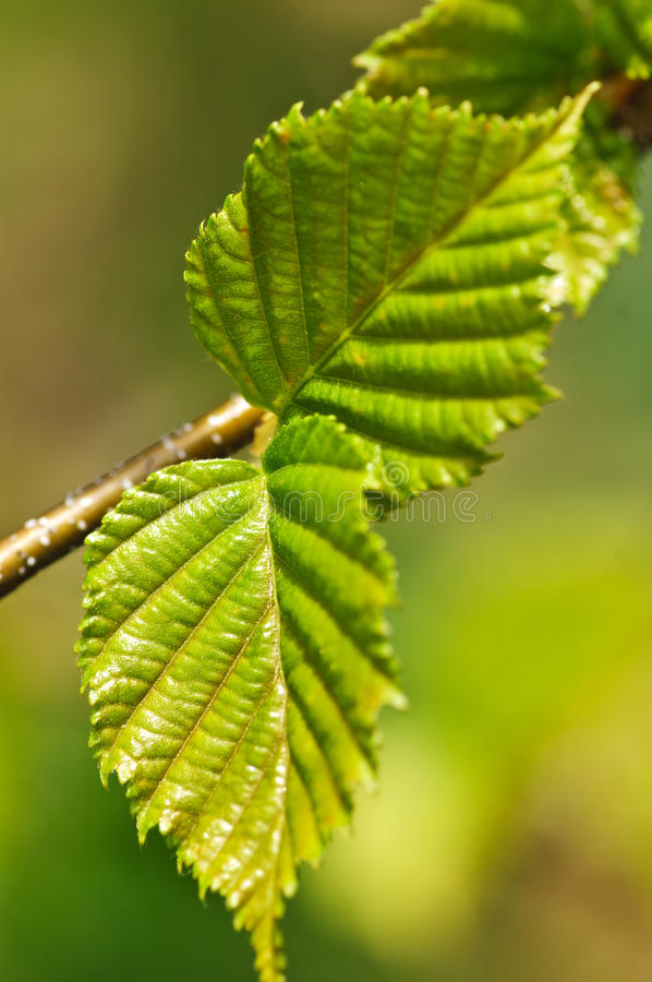 Download Green spring leaves stock image. Image of greenery, life - 11990107