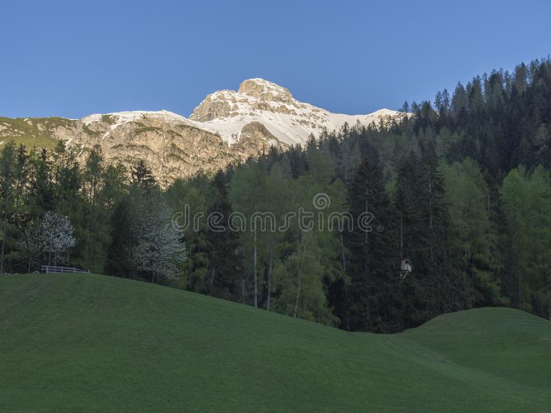 Green spring meadow with high seat and blooming trees, forest and snow covered mountain peak in Stubai valley, Neustift. Im Stubaital Tyrol, Austrian Alps stock images