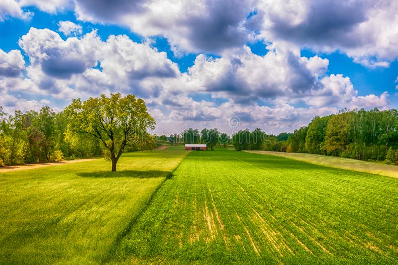 Green spring on the field. Sunny day on the country side. Red barn standing on the field. Agriculture, blum, cereal, clouds, corn, countryside, farm, grass stock photo