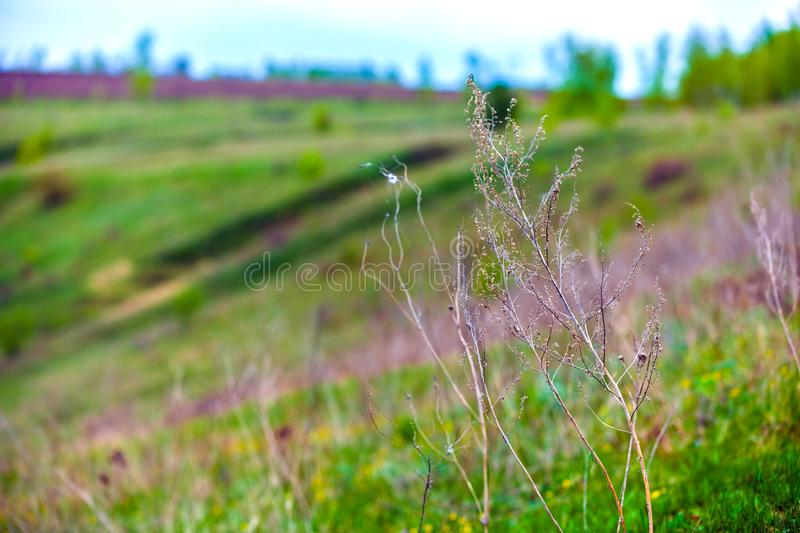 Green spring in Russia. royalty free stock image