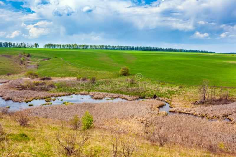 Green spring in Russia. stock photography