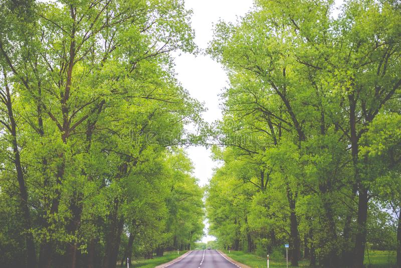 Green spring trees tunnel and road royalty free stock image