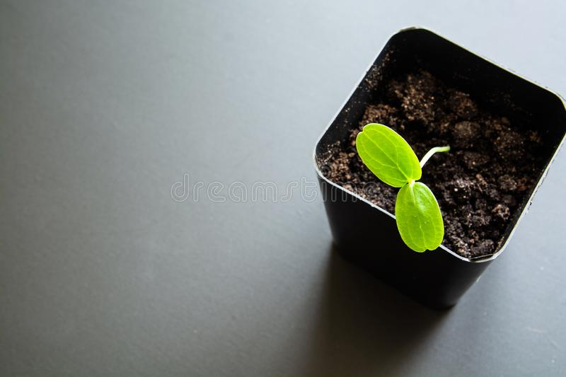 Green sprout in a сontainer for seedlings. Minimalistic image with place for caption royalty free stock photo