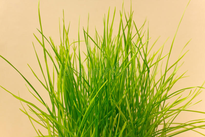 A green sprout from a boot royalty free stock images