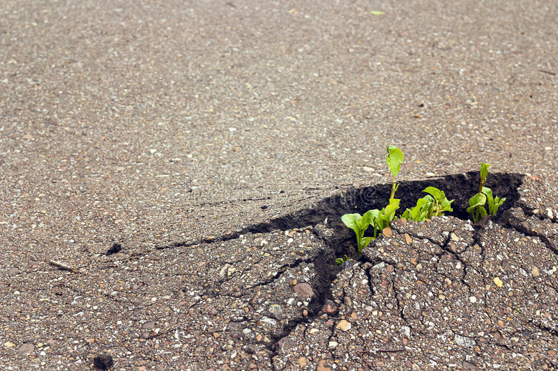Green sprout growing through the asphalt. The concept of coping stock photo