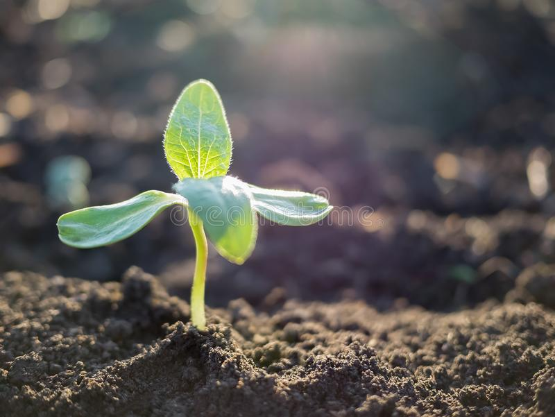 Green sprout growing out from soil stock photos