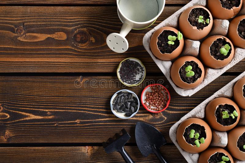 Green sprout growing out from soil in eggshells on table in the garden royalty free stock photography