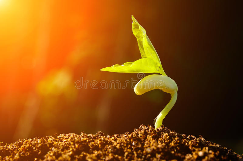 Green sprout growing from seed. And color tone effect stock photos