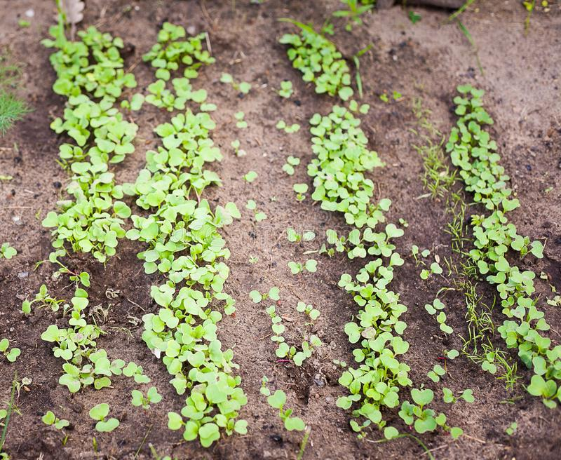 Green sprout growing from seed. New beginning spring sprouts stock image