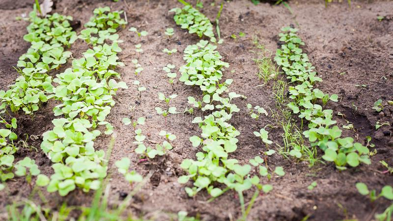 Green sprout growing from seed. New beginning spring sprouts stock photography