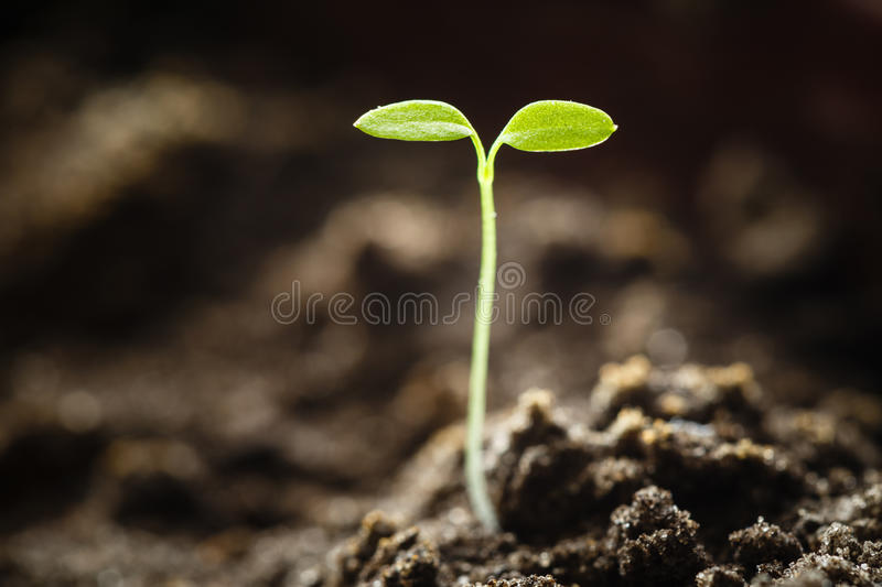 Green sprout growing from seed. Spring symbol, concept of new life stock photos