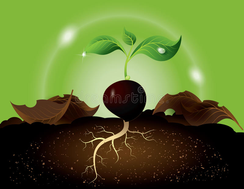 Green sprout growing from seed royalty free illustration
