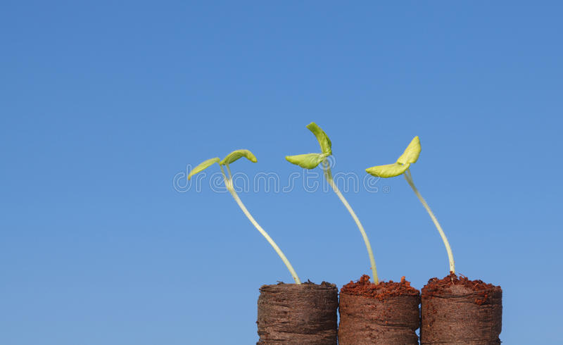 Green sprouts reach for light royalty free stock photography